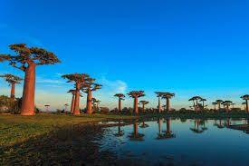 INCANTEVOLE-MADAGASCAR
